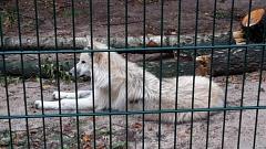 Den Wolf im Blick©TuS Leese
