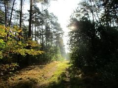 Der Sonne entgegen©TuS Leese