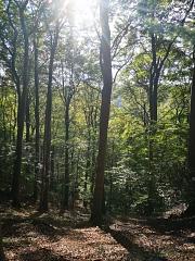 Waldwanderung im Süntel